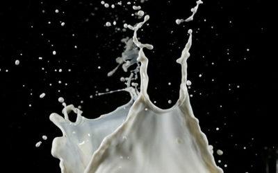 О молоке животных от А до Я